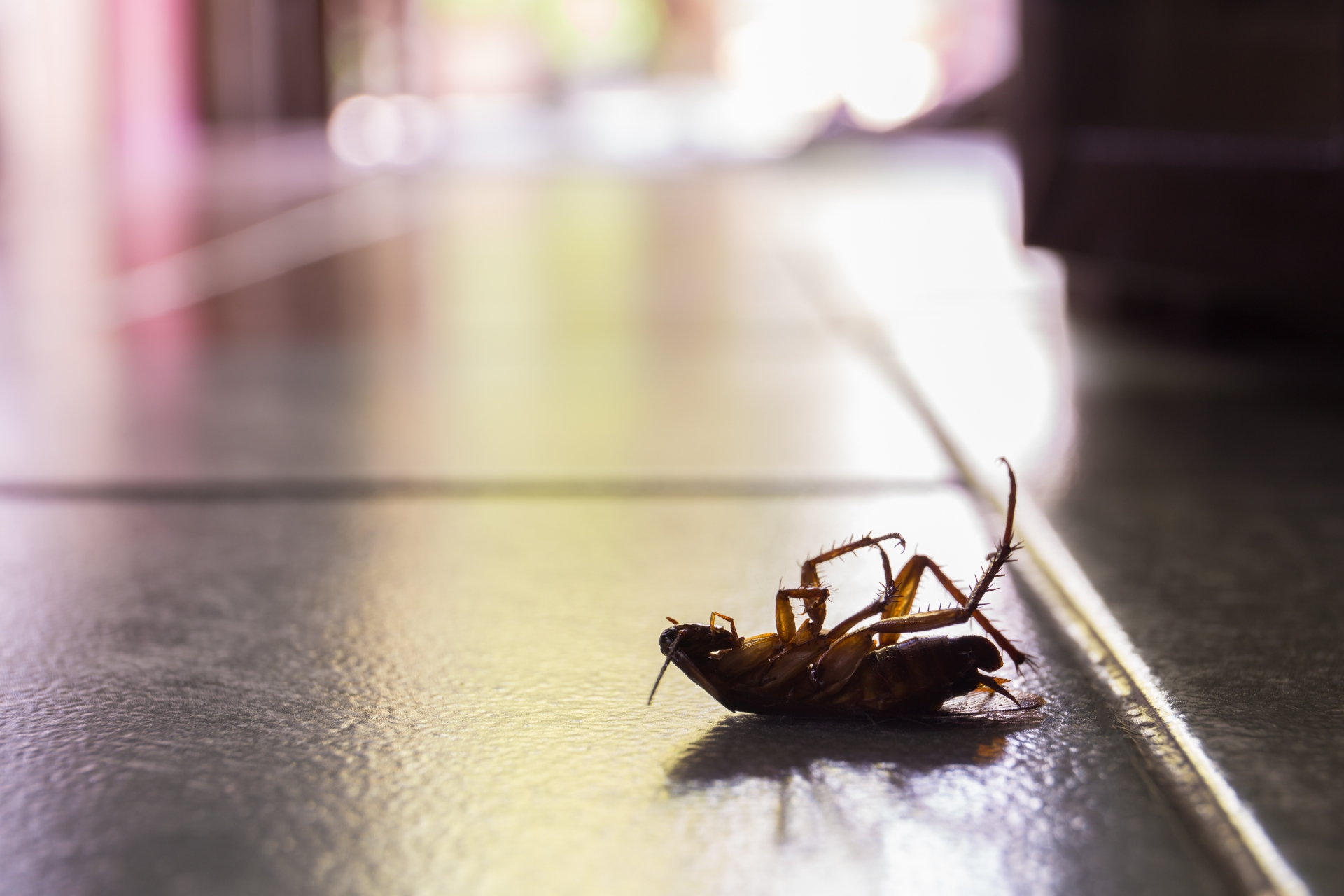 Cockroach Control, Pest Control in Brompton, SW3. Call Now 020 8166 9746