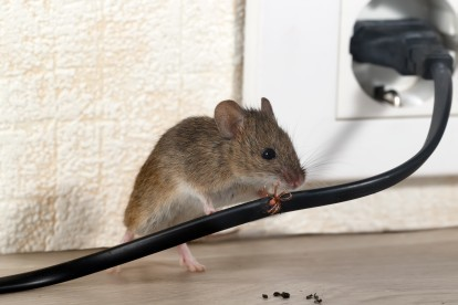 Pest Control in Brompton, SW3. Call Now! 020 8166 9746