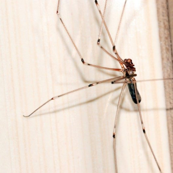 Spiders, Pest Control in Brompton, SW3. Call Now! 020 8166 9746