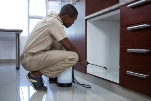 Pest Inspection, Pest Control in Brompton, SW3. Call Now 020 8166 9746